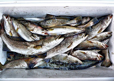 Photograph - Speckled Trout by Kathy K McClellan