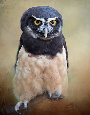 Photograph - Spectacled Owl by David and Carol Kelly