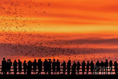 Photograph - Spectacular golden sunset greets Austin's Congress Bridge Bats by Austin Bat Tours