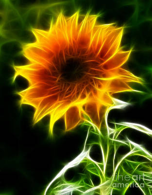 Spectacular Sunflower Art Print by Pamela Johnson