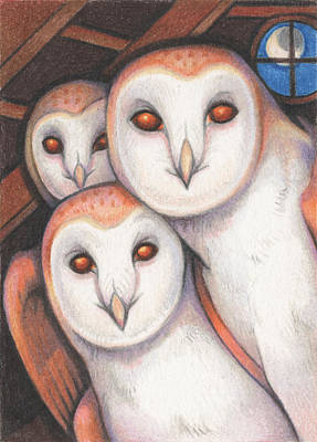 Barn Owl Drawing - Spectral Beings by Amy S Turner