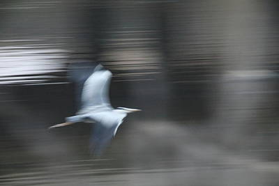 Animal Abstract Photograph - Speed Of Bird by Hyuntae Kim