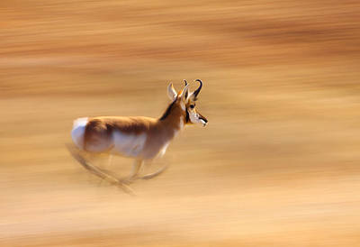 Photograph - Speed by Kadek Susanto