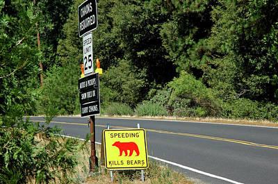 Bear Photograph - Speeding Kills Bears by LeeAnn McLaneGoetz McLaneGoetzStudioLLCcom