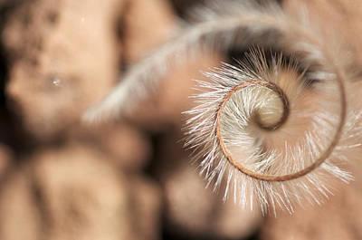 Speer Photograph - Speer Grass by Graham Elliott
