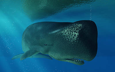 Aquatic Digital Art - Sperm Whale by Daniel Eskridge