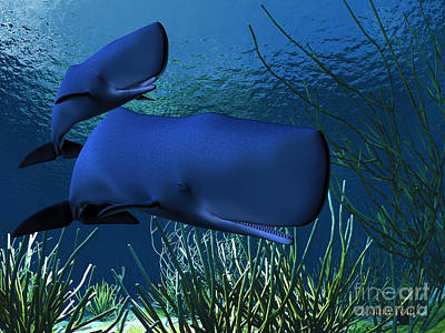 Cetacean Digital Art - Sperm Whales by Corey Ford