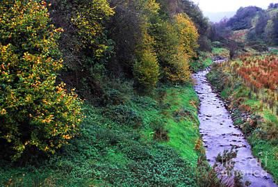 Anchor Down - Sperrin Mountains Stream by Thomas R Fletcher