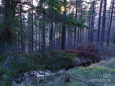 Photograph - Speyside Woodland by Phil Banks