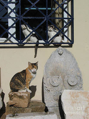 Of Calico Cat Photograph - Sphinxes Of Thebes  by Clay Cofer