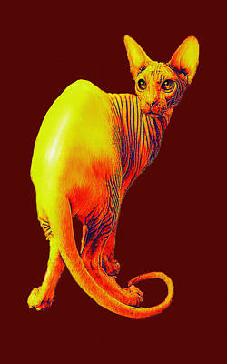 Digital Art - Sphynx Cat by Jane Schnetlage