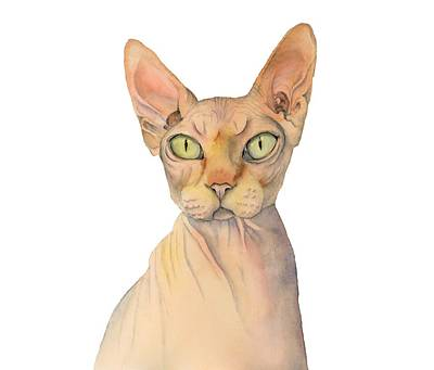 Sphynx Cat Painting - Sphynx Cat Watercolor Portrait by NamiBear