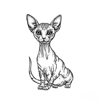 Drawing - Sphynx Kitten by Angel Ciesniarska