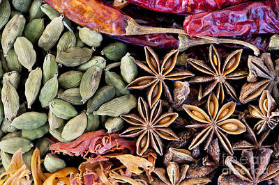 Dried Photograph - Spice Collection  by Tim Gainey