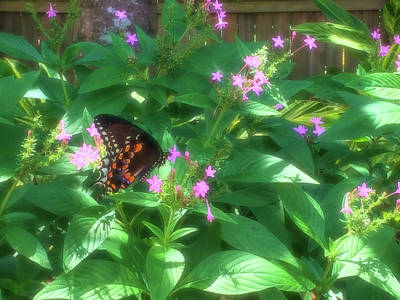 Photograph - Spicebush Swallowtail Butterfly Enchanted by Aimee L Maher ALM GALLERY