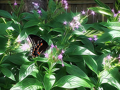 Photograph - Spicebush Swallowtail Butterfly Energy Flow by Aimee L Maher ALM GALLERY
