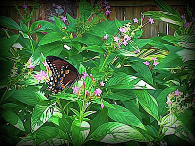 Photograph - Spicebush Swallowtail Butterfly Evening Shadow by Aimee L Maher ALM GALLERY