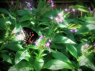 Photograph - Spicebush Swallowtail Butterfly Glow by Aimee L Maher ALM GALLERY