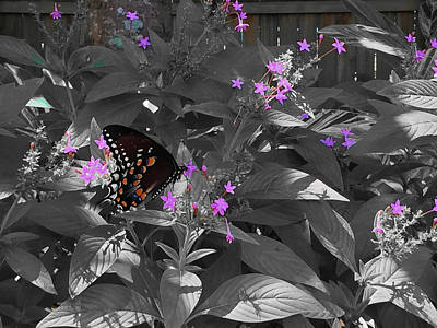 Photograph - Spicebush Swallowtail Butterfly Subtle Color by Aimee L Maher ALM GALLERY