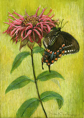 Painting - Spicebush Swallowtail On Bee Balm by Susan Donley