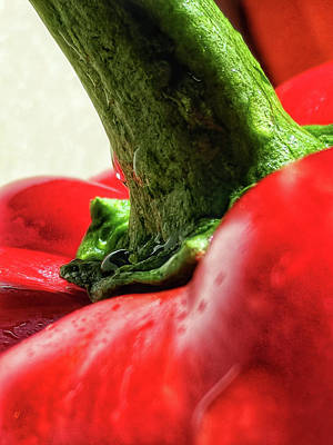 Photograph - Spicy by Adam Vance