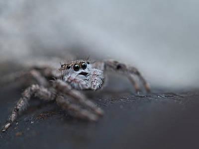 Fuzzy Digital Art - Spider 2 by Kimberly Comalli
