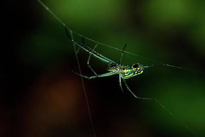 Photograph - Spider Adding A Tension Span Web by Douglas Barnett