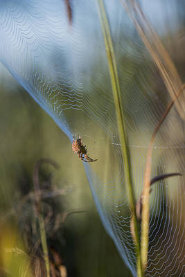 Photograph - Spider And Sedge by Robert Potts