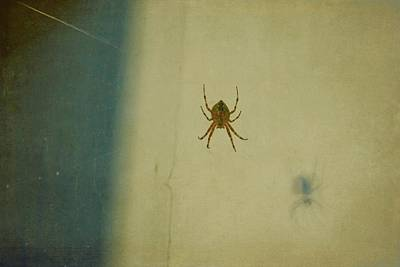 Photograph - Spider And Shadow by Patricia Strand
