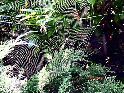 Photograph - Spider And Web by Sadie Reneau