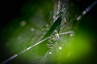 Photograph - Spider by Craig Szymanski