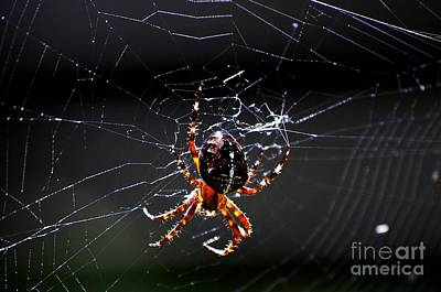 Photograph - Spider by David Lane