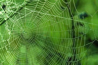 Spider Dew Art Print