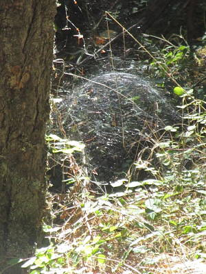 Photograph - Spider Dome by Marie Neder