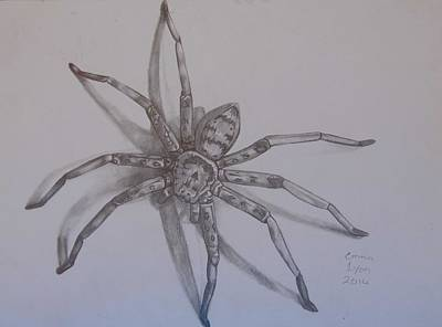 Drawing - Spider by Emma Lyon