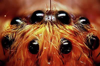 Photograph - Spider Eyes by Julio De La Torre