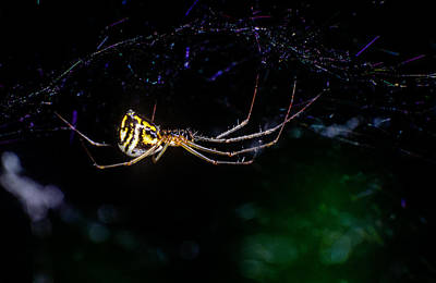 Photograph - Spider Hanging In Web by John Brink