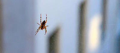 Photograph - Spider Hello Panorama by Bonnie Follett