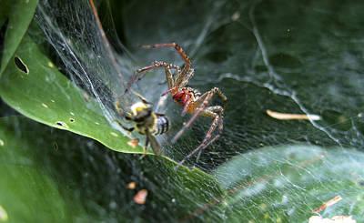 Western Art - Spider attack by Steven Chadwick