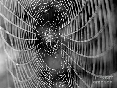 Spider In A Dew Covered Web - Black And White Art Print