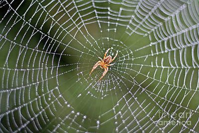 Photograph - Spider In A Dew Covered Web by Bruce Block