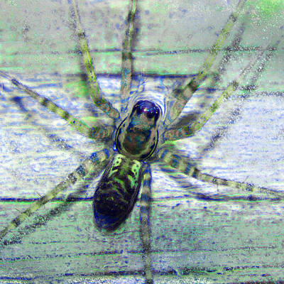 Photograph - Spider In A Puddle by Adria Trail