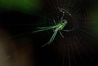 Photograph - Spider In Spider Web Orb by Douglas Barnett