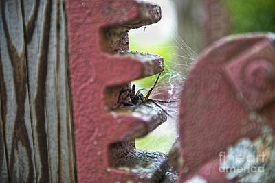 Photograph - Spider In The Gears by David Arment