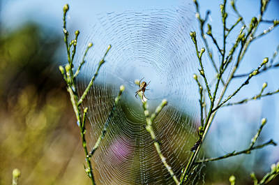 Photograph - Spider In Web by Christina VanGinkel