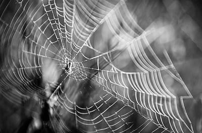 Photograph - Spider In Web In Black And White by Christina VanGinkel