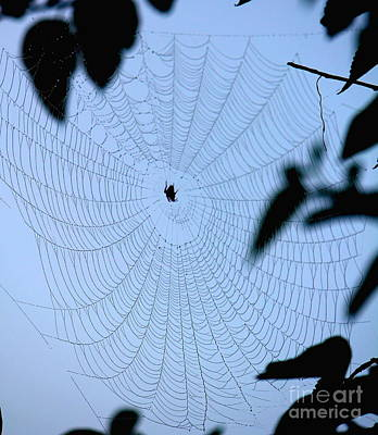 Photograph - Spider In Web by Sheri LaBarr