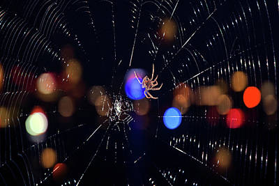 Photograph - Spider by Joann Vitali