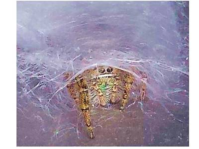 Spider Art Print by Joanne Elizabeth