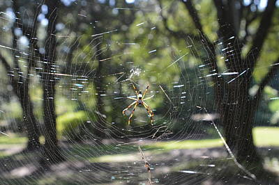 Photograph - Spider by Judith Morris